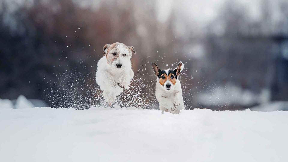 Soterrados na neve, são salvos...