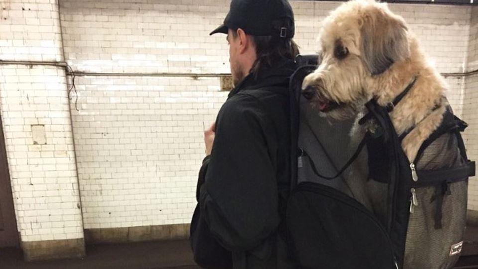 Cães só podem ir de metro, em ...