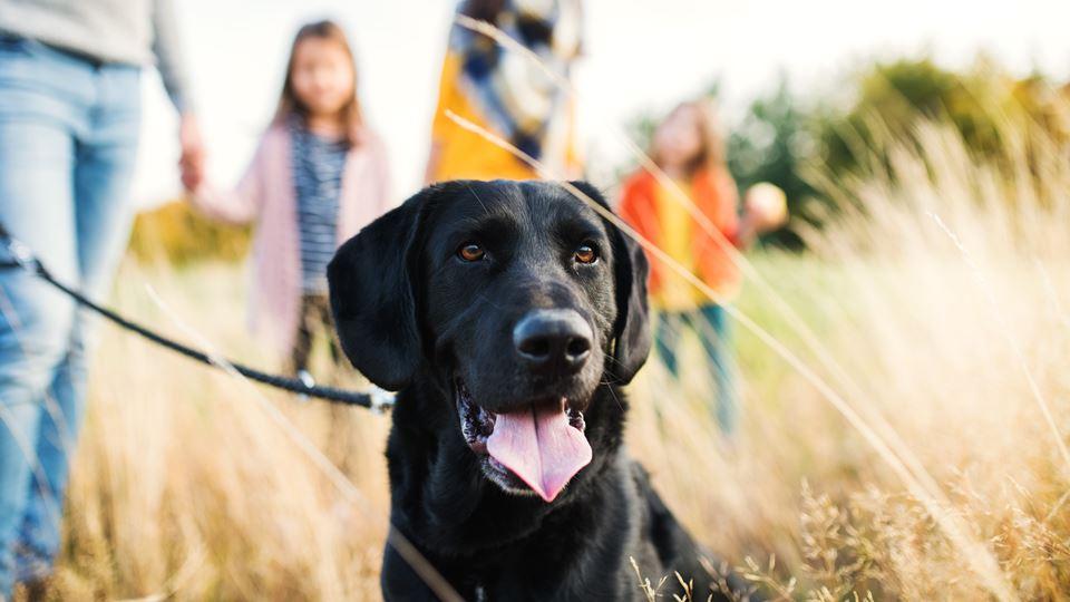 Ter animais de estimação benef...