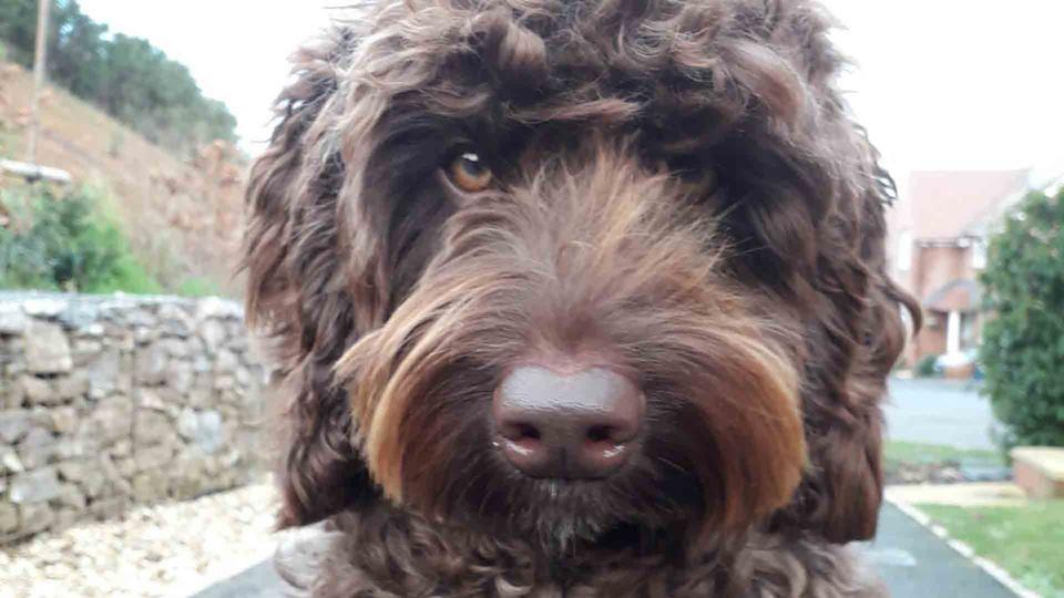 Este cão salvou uma mulher!