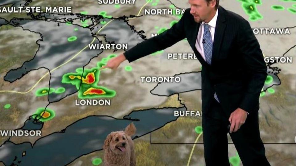 Cão invade meteorologia em dir...