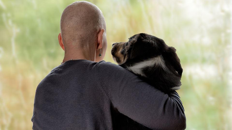 Cães confortam familiares de d...