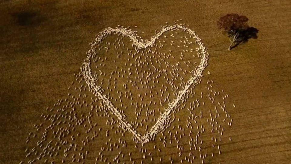 Agricultor cria um coração fei...