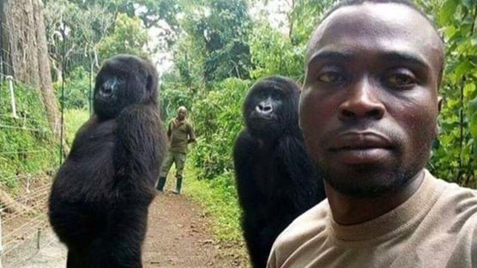 cuidador e gorila selfie