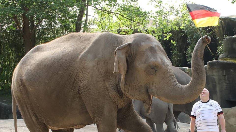 Yashoda, o elefante que prevê ...