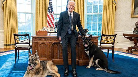 Cães de Joe Biden são retirado...