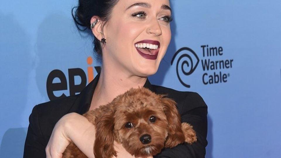 Katy Perry e o cão tornam-se v...