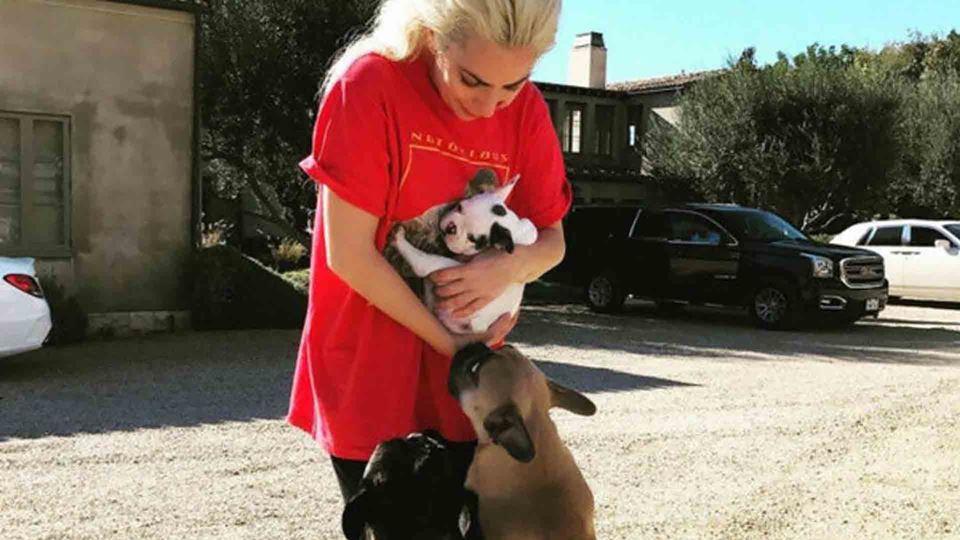 Lady Gaga com cães - Destaque