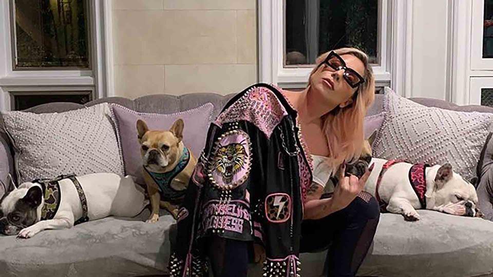 Lady Gaga com os seus cães - Destaque