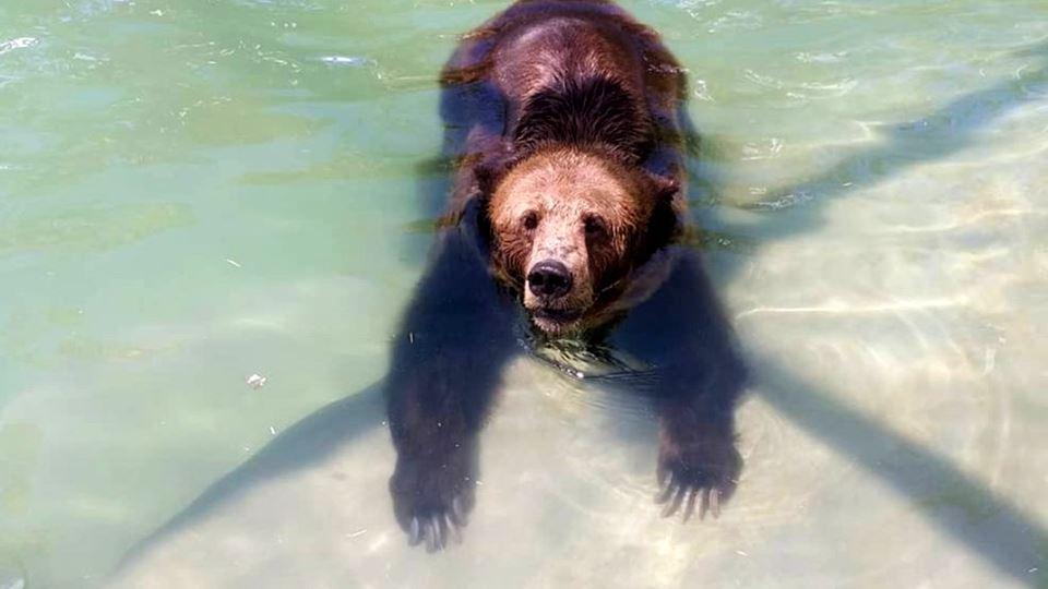 Mizar, a ursa que sofre de art...