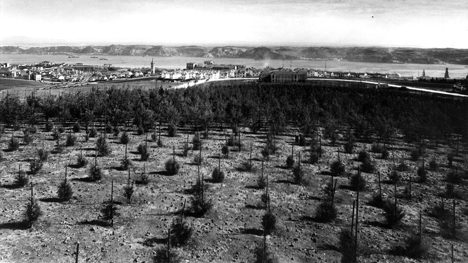 monsanto árvores a crescer