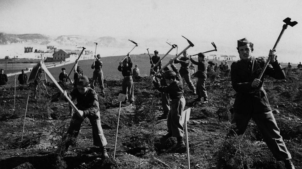 pessoas a plantar árvores monsanto