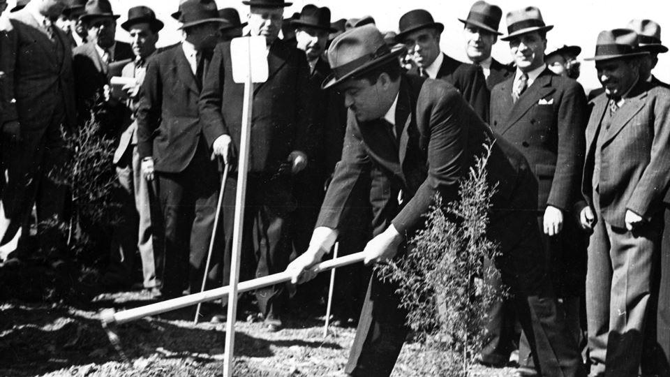 plantar árvores monsanto 2