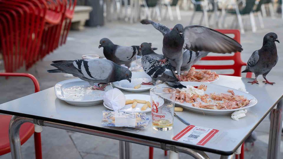 Pombos numa esplanada