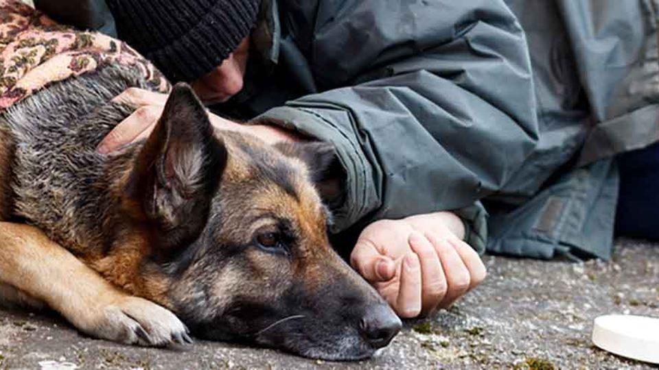Sem-abrigo ao lado de cão