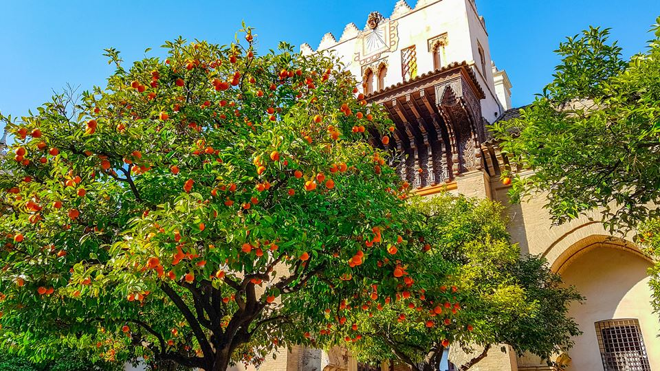 Sevilha tem tantas laranjas qu...