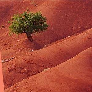 Ana Gomes Living - top 5 formas de respeitar o planeta