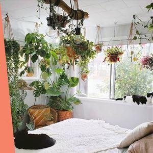 Ana Gomes Living - top 5 das plantas para termos no quarto